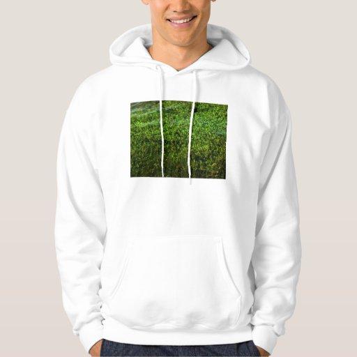 Plantas de agua subacuáticas en la charca jersey con capucha