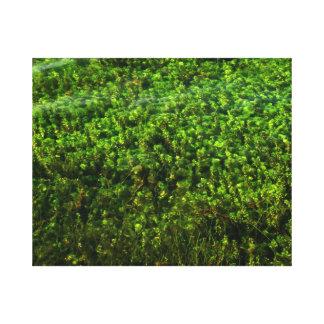 Plantas de agua subacuáticas en la charca impresión en lienzo estirada