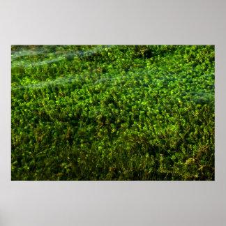 Plantas de agua subacuáticas en la charca poster