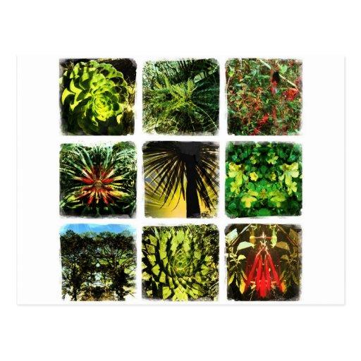 Plantas de Dali Postales