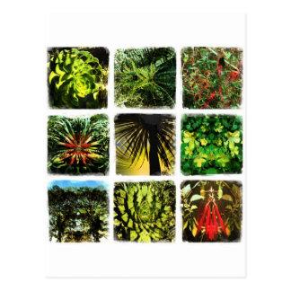 Plantas de Dali Tarjeta Postal