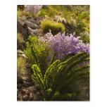 Plantas de desierto de Chihuahuan en la floración Tarjetas Postales