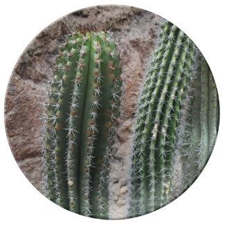 Plantas de desierto de los cactus del cactus del platos de cerámica