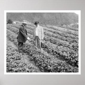 Plantas de fresa Sitka Alaska 1916 Poster
