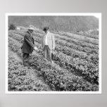 Plantas de fresa Sitka, Alaska 1916 Poster