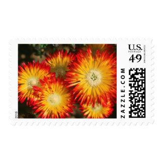 Plantas de hielo (Lampranthus aurífero) en la Sello Postal