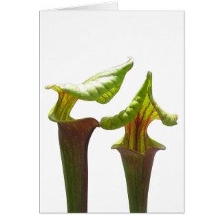 Plantas de jarra tarjetas