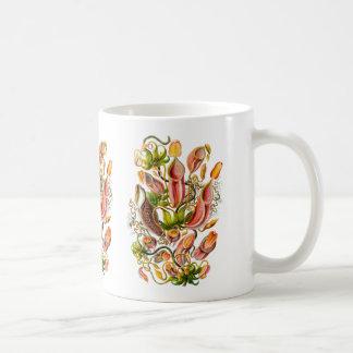 Plantas de jarra taza básica blanca
