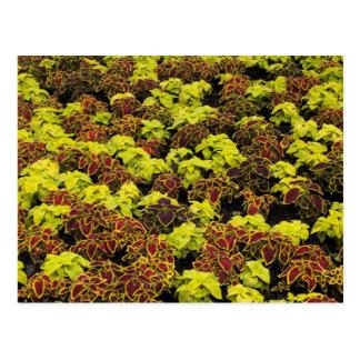 Plantas de la flor postal