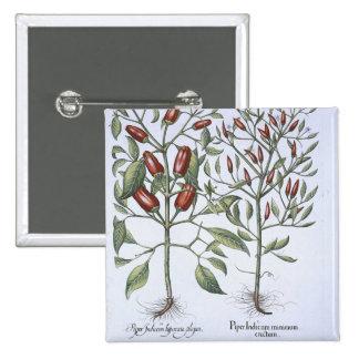 Plantas de la pimienta de chiles, del 'Hortus Eyst Pin Cuadrado