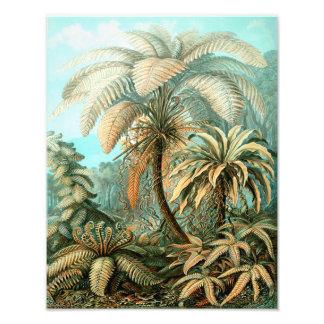 """Plantas de los """"helechos tropicales"""" de Ernst Fotografías"""