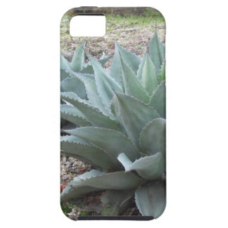 Plantas del agavo del desierto iPhone 5 carcasas