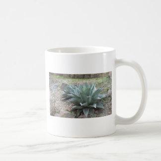 Plantas del agavo del desierto tazas de café