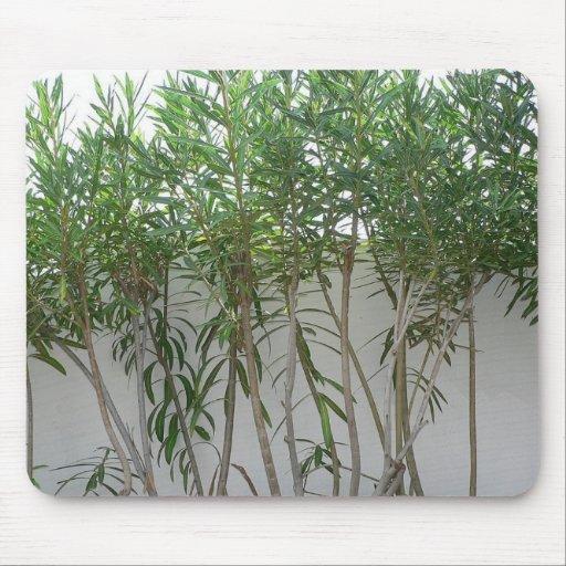 Plantas del árbol en la pared blanca mouse pads
