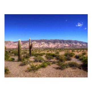 Plantas del cactus de Salta la Argentina y colina Tarjetas Postales