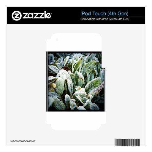 Plantas del invierno calcomanías para iPod touch 4G