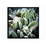 Plantas del invierno postal