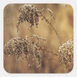 Plantas del otoño, sepia, pacífica calcomania cuadradas