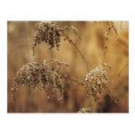 Plantas del otoño, sepia, pacífica postal