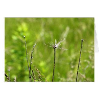 Plantas del verano con el fondo verde de la luz de tarjeton