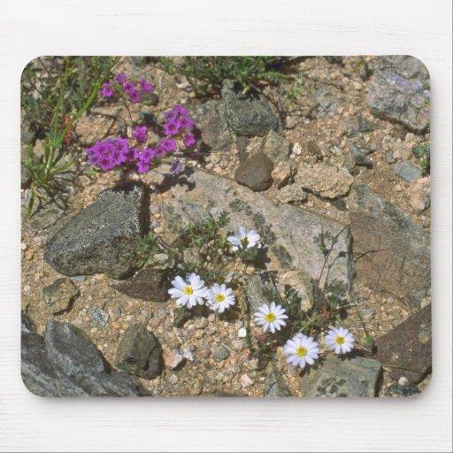 Plantas duras como una roca tapetes de raton