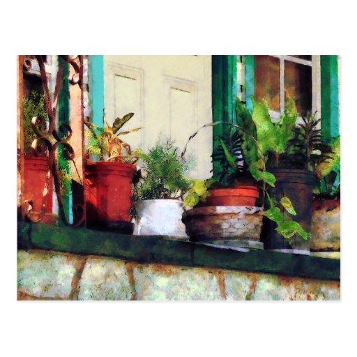 Plantas en el pórtico postal