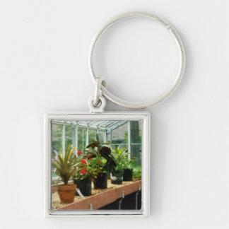 Plantas en invernadero llavero cuadrado plateado