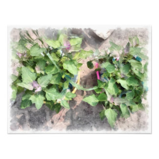 Plantas en la cocina casera fotografía