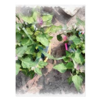 Plantas en la cocina casera tarjetas postales