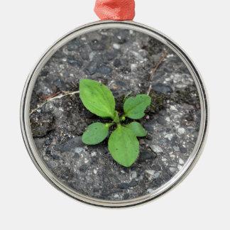 Plantas en un camino cubierto de alquitrán adorno redondo plateado