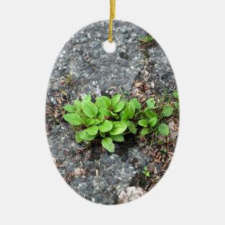 Plantas en un camino cubierto de alquitrán adorno ovalado de cerámica