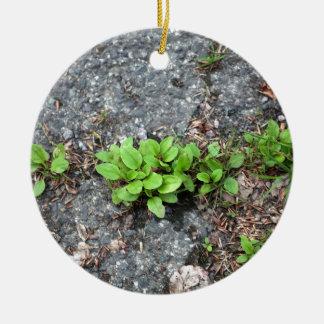 Plantas en un camino cubierto de alquitrán adorno redondo de cerámica