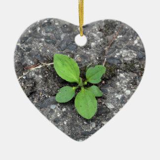 Plantas en un camino cubierto de alquitrán adorno de cerámica en forma de corazón