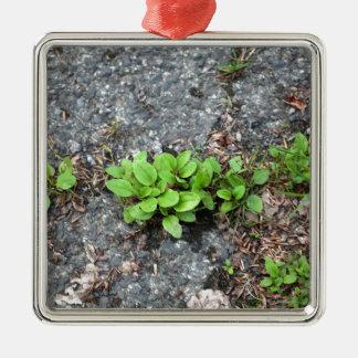 Plantas en un camino cubierto de alquitrán adorno cuadrado plateado