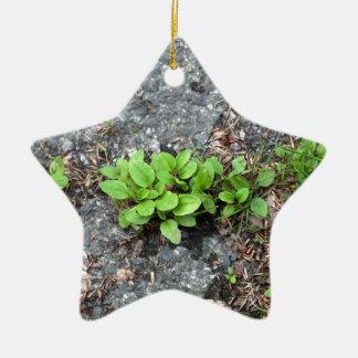 Plantas en un camino cubierto de alquitrán adorno de cerámica en forma de estrella
