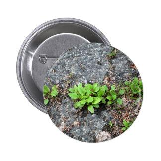 Plantas en un camino cubierto de alquitrán pin redondo 5 cm