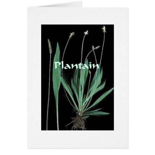 Plantas mágicas - tarjeta del llantén