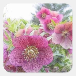 Plantas perennes - Hellebore púrpura Pegatinas Cuadradas Personalizadas