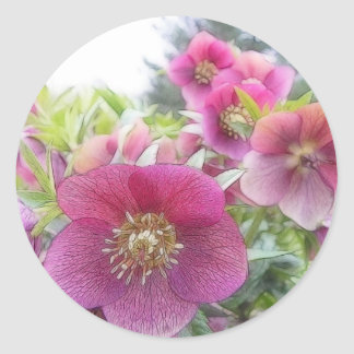 Plantas perennes - Hellebore púrpura Pegatina