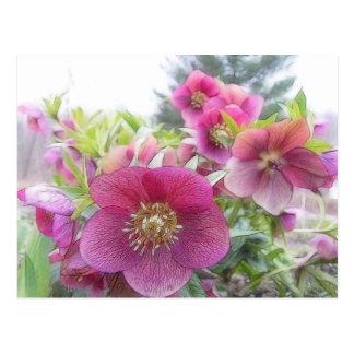 Plantas perennes - Hellebore púrpura Tarjetas Postales