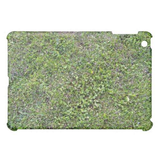 Plantas que crecen en paisaje herboso verde