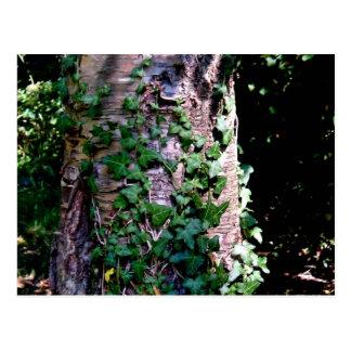 Plantas que suben en árbol en bosque postal