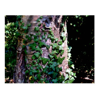 Plantas que suben en árbol en bosque tarjetas postales