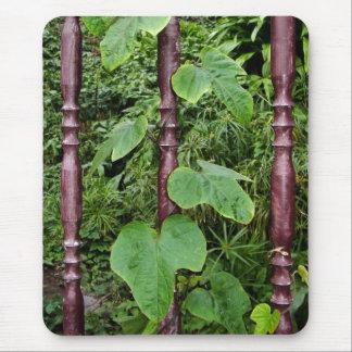 Plantas que suben tapete de raton
