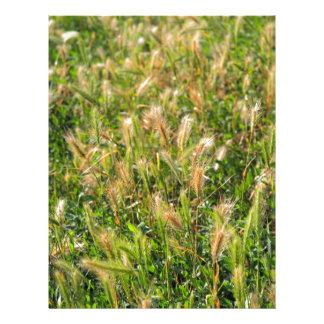 Plantas secas salvajes en el primer de la hierba membrete personalizado