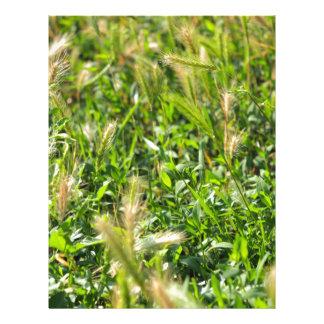 Plantas silvestres en la hierba de prado membrete