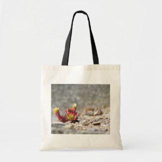 Plantas suculentas bolsa tela barata