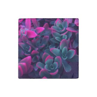 Plantas suculentas coloridas de la hoguera del imán de piedra
