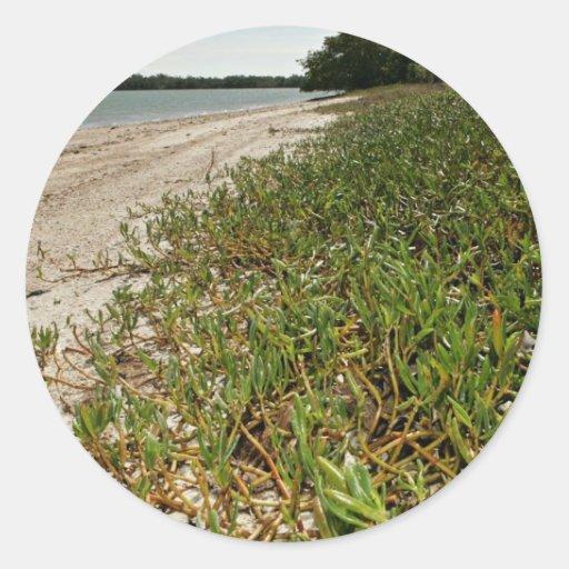 Plantas suculentas en la playa etiqueta