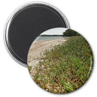 Plantas suculentas en la playa iman de nevera